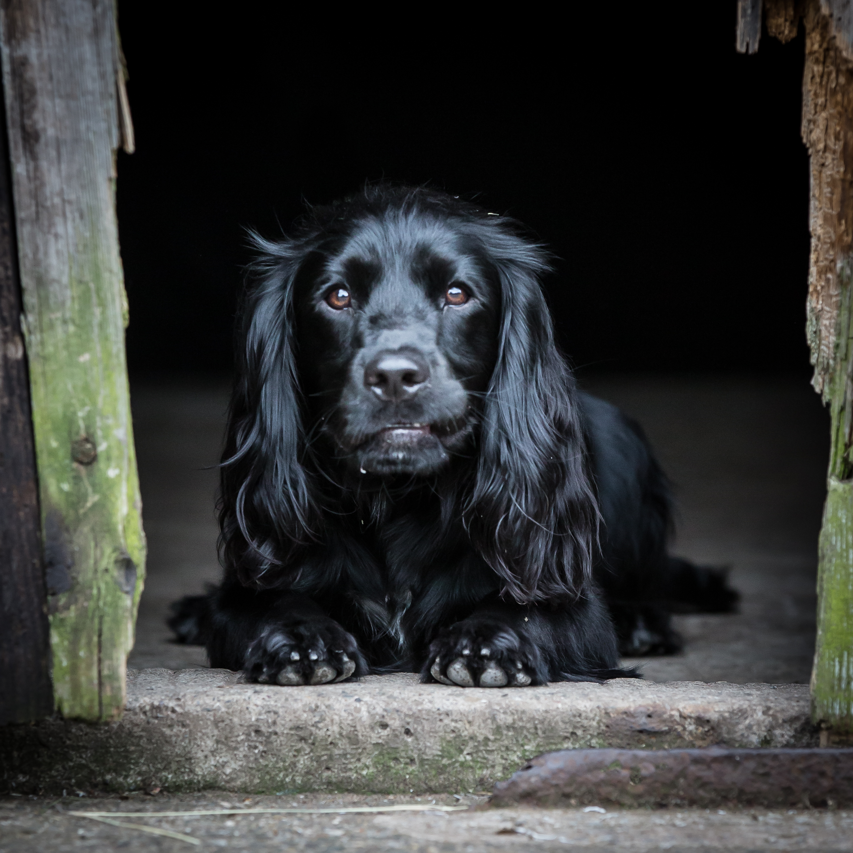 Image Result For Dog Training Classes South Manchester